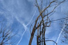 Sky and Tree to Mr. Pontrelli of Stroudsburg (045)