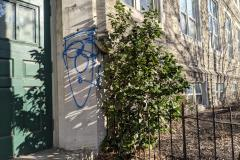Weed Tree Graffiti to Mr. Donahue of Philadelphia (048)