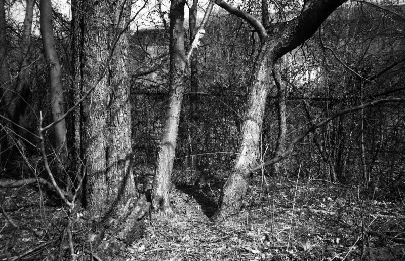 20080323-trees