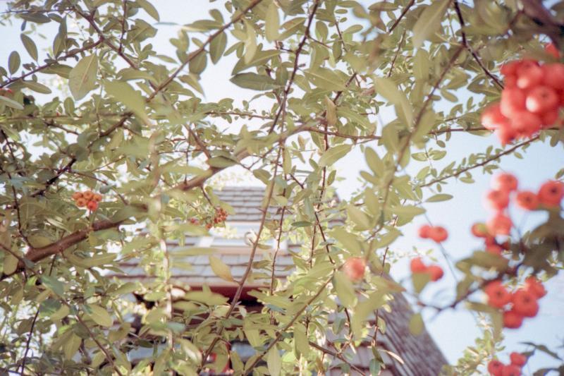 20090113-berries