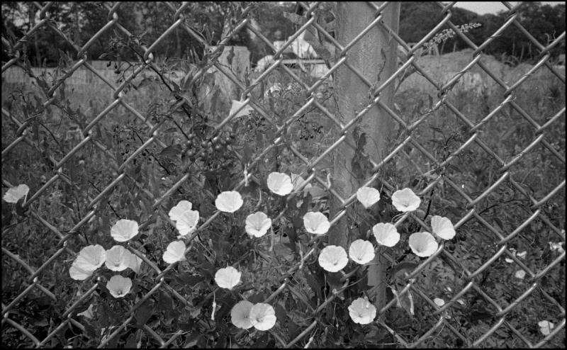 barnes-flowers