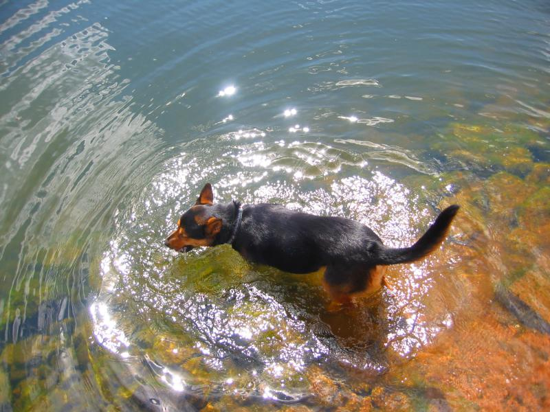 Bella Swimming