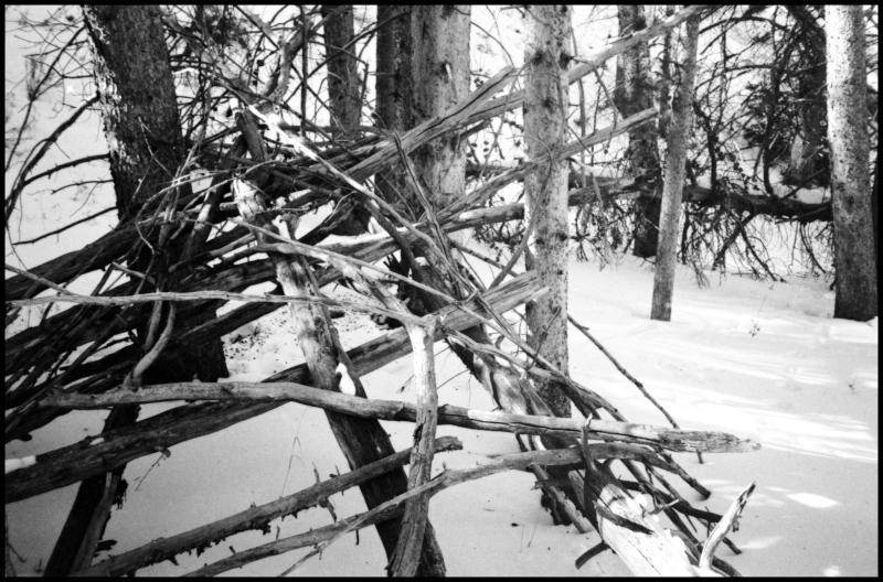 colorado - branches
