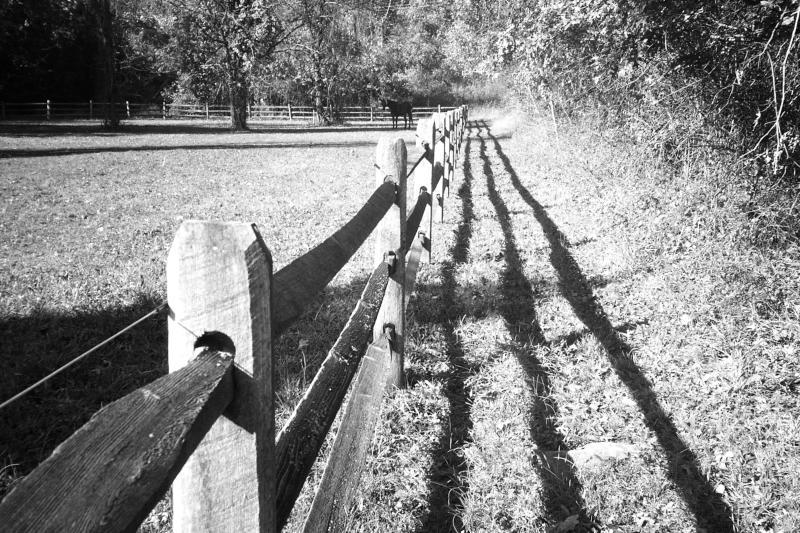 fence  horse