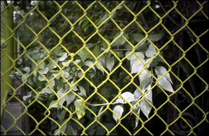 fence and painted leaves