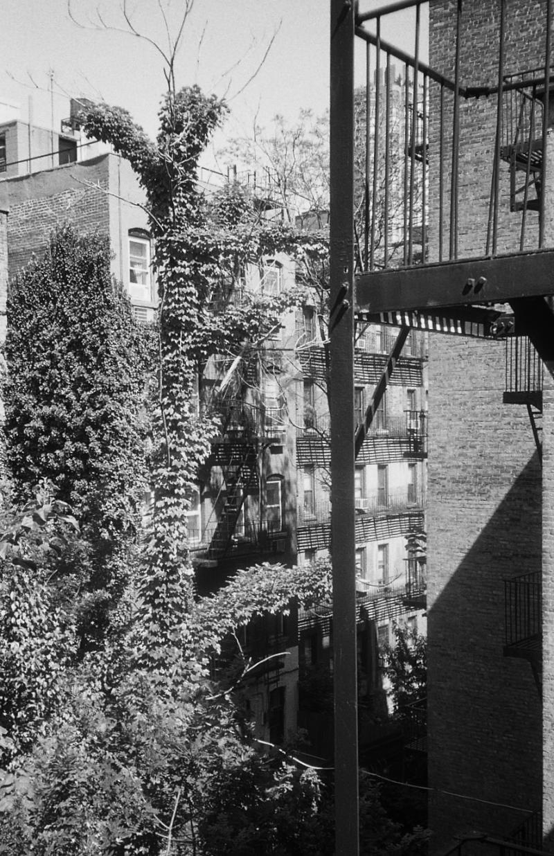 fire escape  vine covered tree