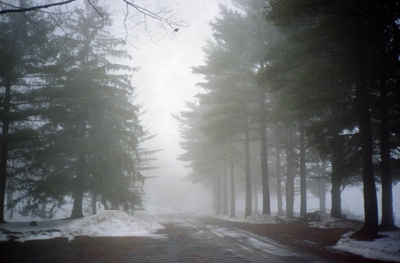 foggy skytop
