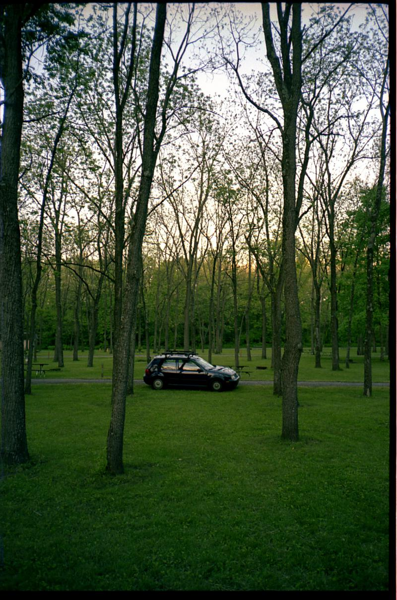 My Car in the Trees