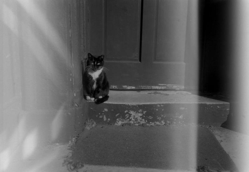 stray cat  stray light