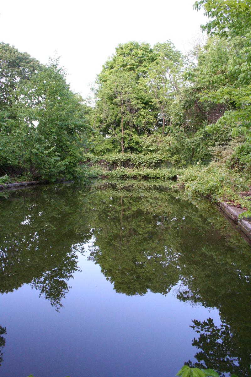 Trees  Pool