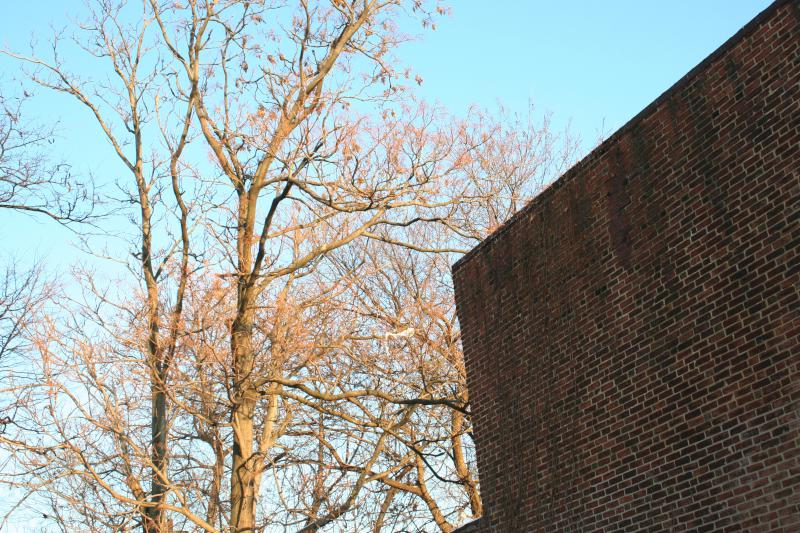 Trees and Wall