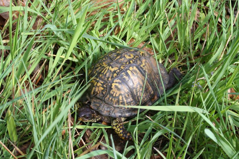 Turtle Natural Habitat