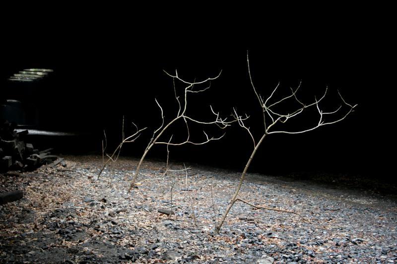 Underground Trees