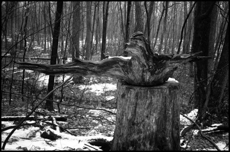wood-bw